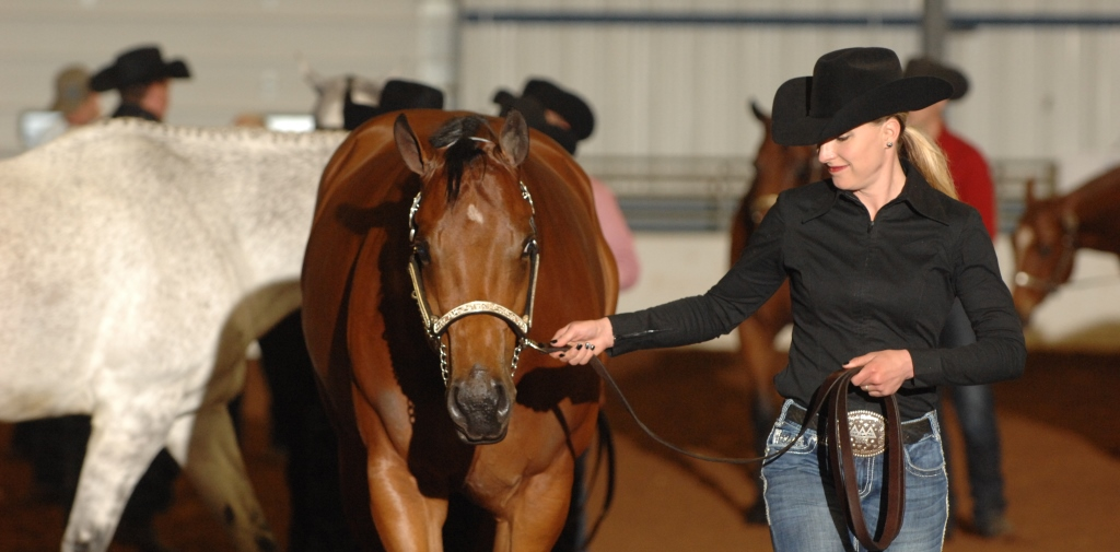 Spring Fling QH Shows   The Showplex at the Fairgrounds   Hamburg NY