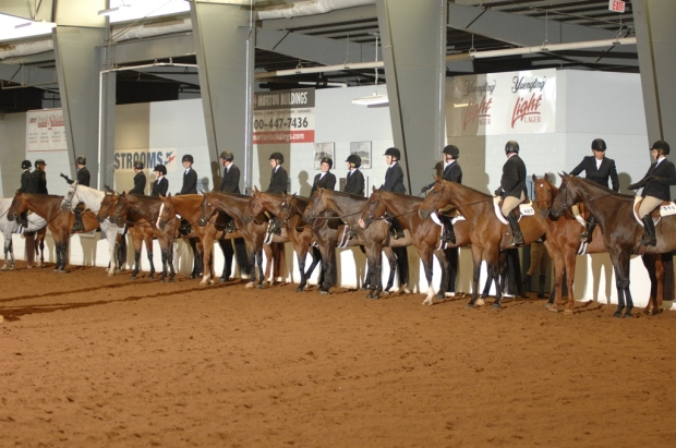 Spring Fling QH Shows | The Showplex at the Fairgrounds | Hamburg NY
